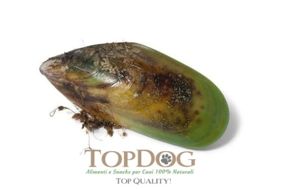 Cozze verdi per cani